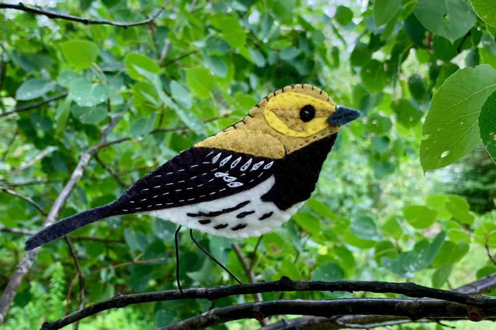 The Whistling Black-throated Green Warbler