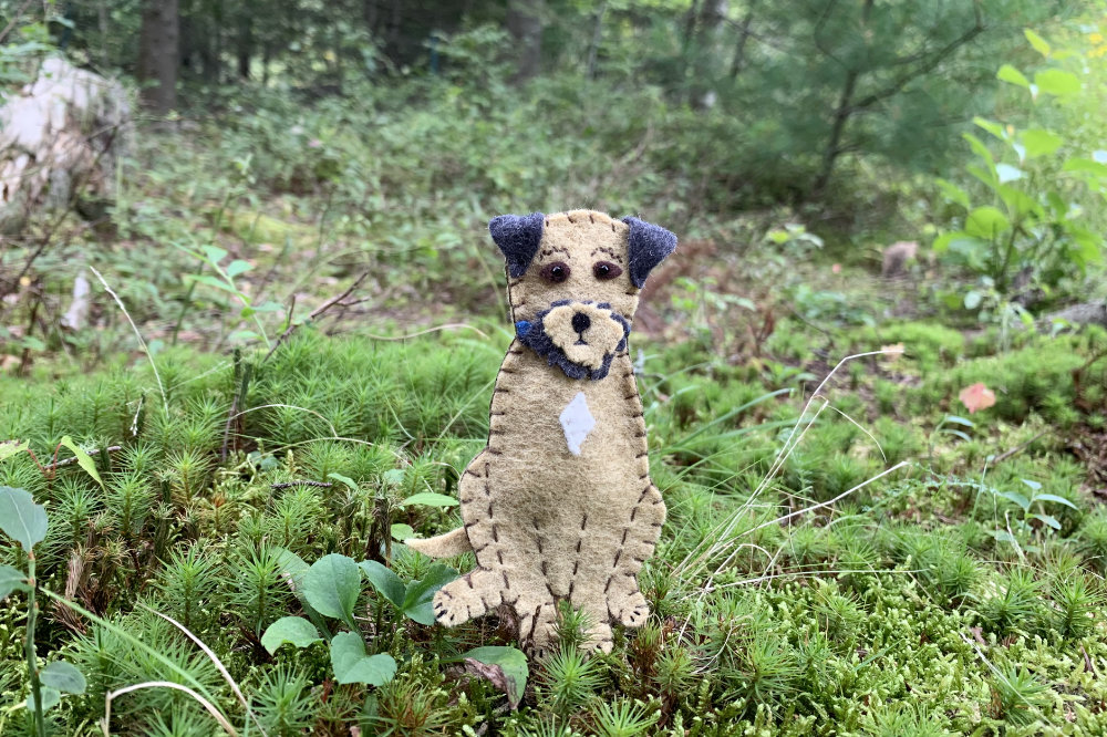 The Boundless Border Terrier