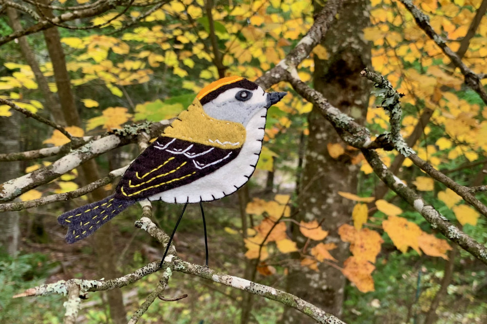 The Tiny Golden-crowned Kinglet
